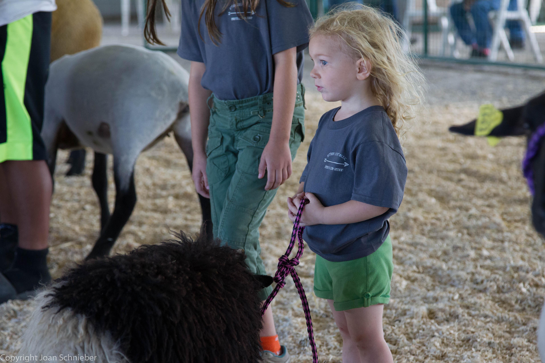 Junior Sheep Show
